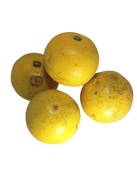 laranja-lima
