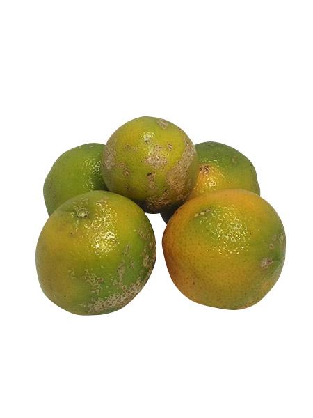 Limão Cravo Orgânico 500g – Sítio Cazarini